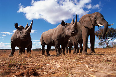 Source: naturepl.com/John-Downer/WWF