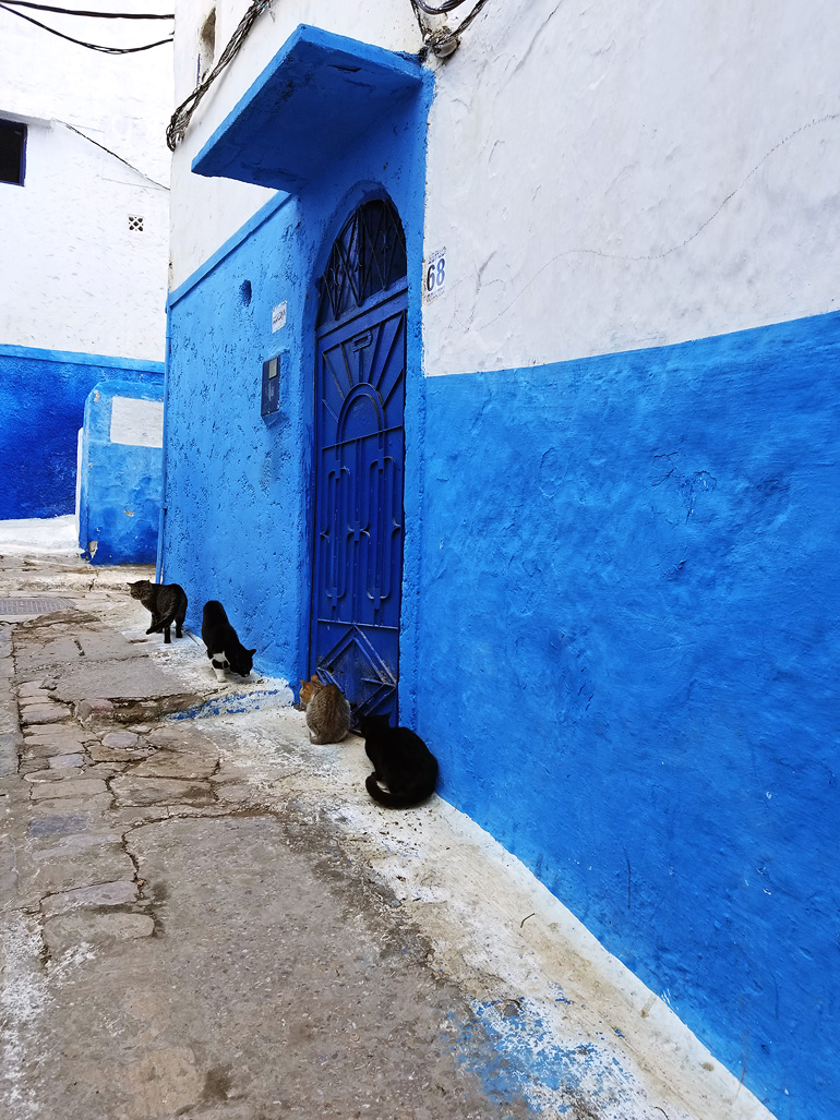 Dagny Zenovia Morocco Travel 16